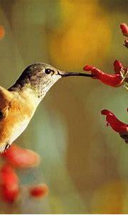 Free Birds HD Wallpapers   HD Wallpapers Depot Pro