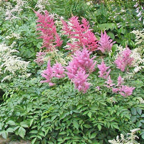 10 Foolproof Perennial Plants For The Northeast Us