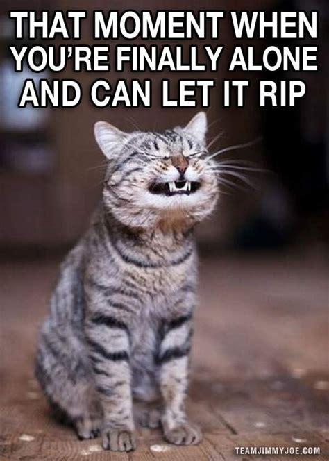 Crazy Cat Memes - 15 ways to laugh funny pics memes team jimmy joe