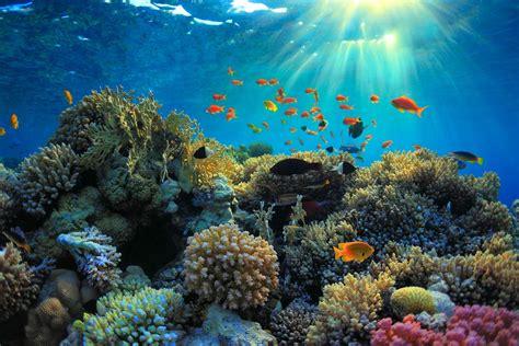 Best Dive Destinations by Top Seven Budget Dive Destinations Scuba Diver