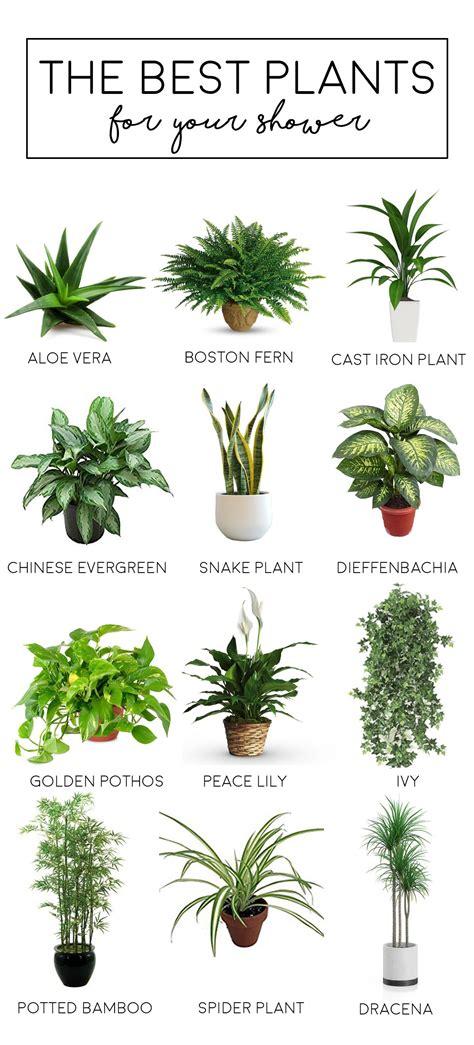 blog growing indoor plants bathroom plants plants