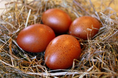 Dark Chicken Eggs