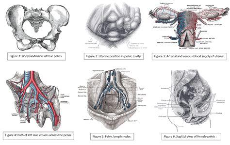 anatomy abdomen  pelvis female pelvic cavity article