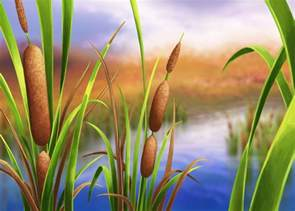 cat tails cattails awkward botany
