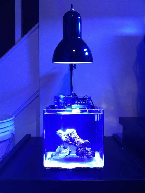 pico reef led lighting my 2 2l micro muse pico reefs nano reef com community