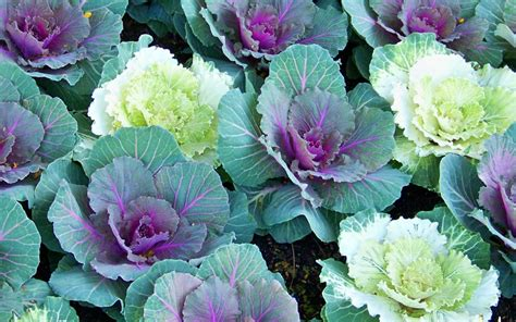florist in winter garden fl home design inspirations
