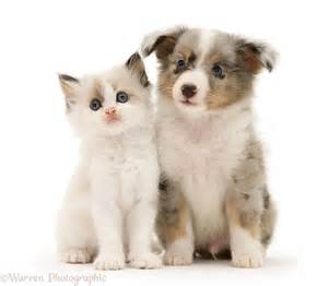 Image result for http://puppy and kitten/