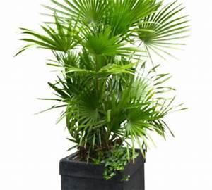 Fausse Plante Verte : plante verte d int rieur longue feuille fine photos de magnolisafleur ~ Teatrodelosmanantiales.com Idées de Décoration