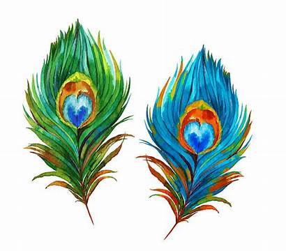 Peacock Feathers Illustration Feather Watercolor Clipart Illustrations