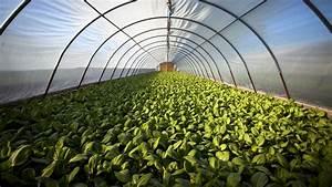 Urban Gardening Definition : time for another agriculture revolution raconteur ~ Eleganceandgraceweddings.com Haus und Dekorationen