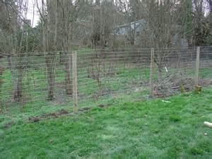 Nigerian Dwarf Goat Fence