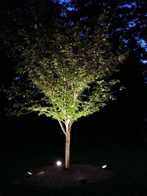 best 25 outdoor tree lighting ideas on pinterest lights