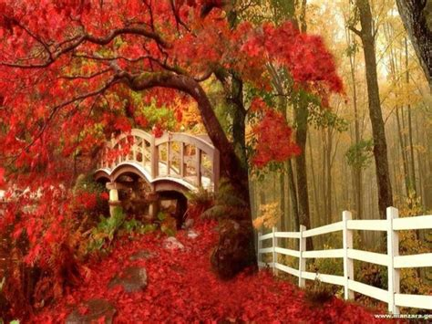 Autumn Themed Wallpapers For Android by Fall Screensavers And Wallpaper Autumn Wallpaper