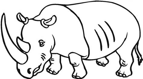 Drawing Rhino Coloring Pages Batch