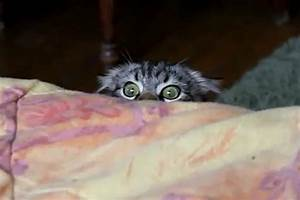 Adorable 'Stalker Cat' Is Watching You [VIDEO]