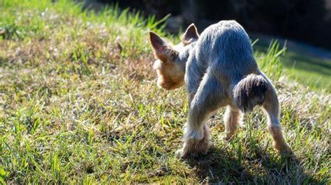 hundekot im garten hundekot im garten bek 228 mpfen und hundehaufen entfernen