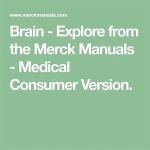 Brain - Explore From The Merck Manuals