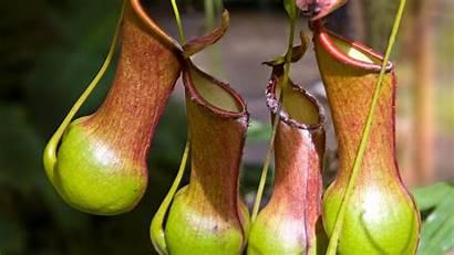 Plant Plants Badly Behaving Nature Planten Facts