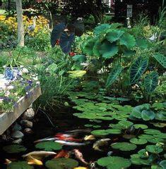 aquaponic gardening images   aquaponics