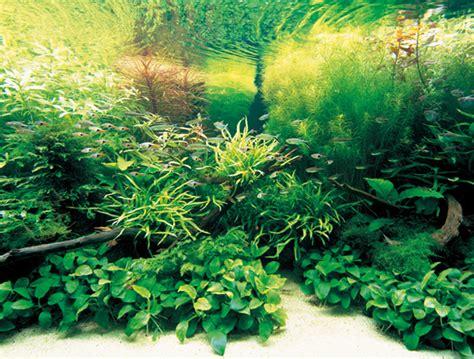 nature aquarium ideas  takashi amano homemydesign