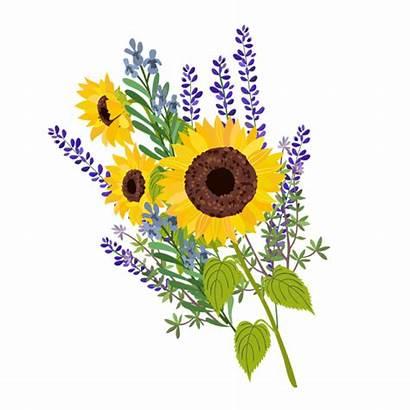 Flower Clipart Sun Floral Transparent Flowers Sunflower