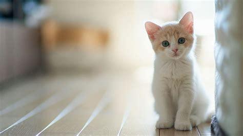 Cute Kitten Backgrounds Wallpaper