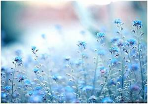 Blue Flower Background Tumblr | Wallpapers Gallery