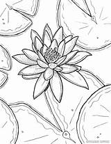 Coloring Lily Water Flower Drawing Monet Pages Printable Adult Claude Lilies Painting Sheets Waterlily Pencil Flowers Stargazer Books Getdrawings Tiger sketch template