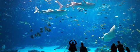 visit aquarium atlanta ga