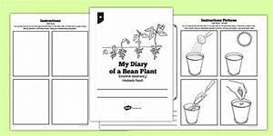 My Diary Of A Bean Plant Polish Translation