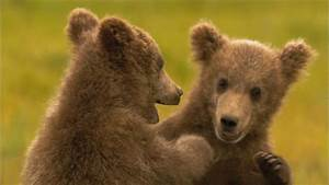 Grizz Quiz  How Much Do You Know About Grizzly Bears