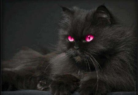 pink eye beauty cats animals background wallpapers