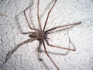 Se Débarrasser Des Araignées : se d barrasser des araign es sur insecticidas ~ Louise-bijoux.com Idées de Décoration
