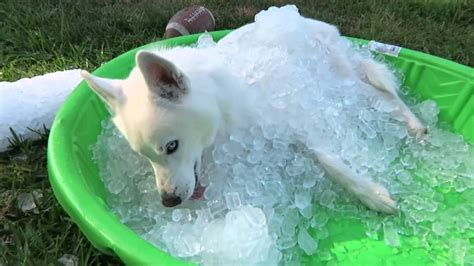 How Your Dog Can Have Endless Fun With A Single Plastic Pool Kitchen Cabinets Plastic Coating Financing Surgery With Bad Credit Seam Welder Metamorphosis Dinnerware Set Grocery Bags Wholesale Bulkhead Fittings Ultrasonic Welding