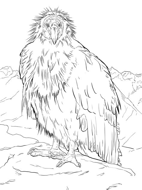 condor coloring pages    print
