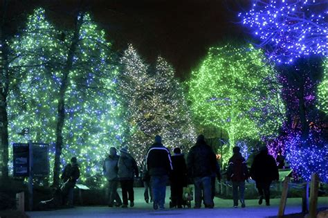 toledo zoo s lights set attendance record toledo blade