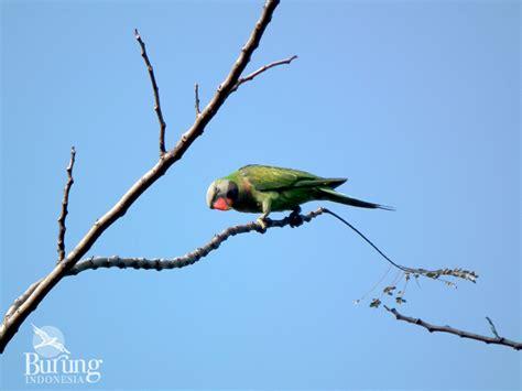gambar animasi burung di atas pohon pickini