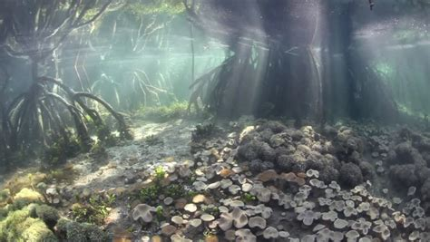 Aquascape Wallpaper by Aquascape Wallpapers Weneedfun