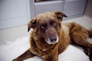 adopting an adult dog with behavioural issues