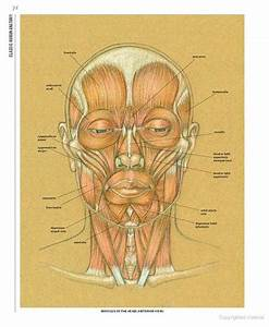 1000  Images About Anatomy  U0026 Physiology