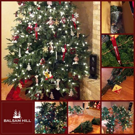 review of balsam hill trees color vs clear the great tree light debate review of balsam hill trees s