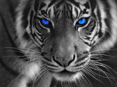 with the eye of the tiger sub 3 or bust therunfactory com