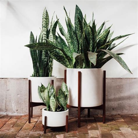 Big White Planters by Yesterday S Post Generated A Lot Of Questions About The