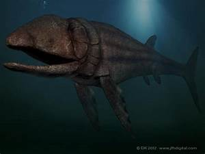 Leedsichthys is a giant member of the Pachycormidae, an ...