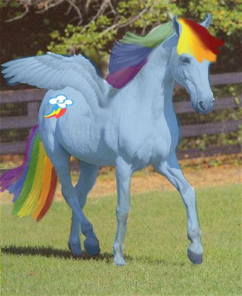 rainbow dash deviantart favourites