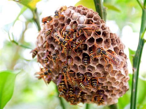 beekeeping methods top bar hives diy