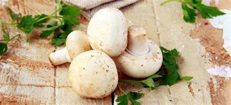 come cucinare i porcini freschi come cucinare funghi freschi cucinarefunghi