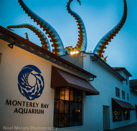 tentacles on parade at the monterey bay aquarium