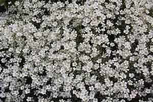 White Flowers Tumblr 17 Widescreen Wallpaper ...