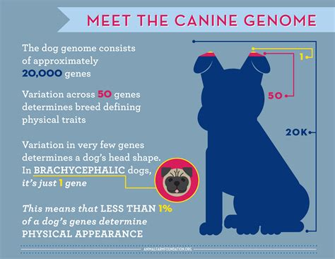 A Closer Look At All Dogs Are Individuals Infographic